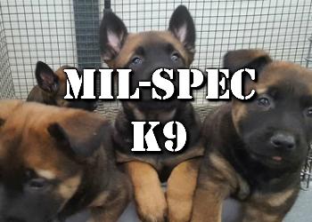 Mil-Spec K9