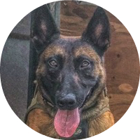 http://www.caninetactical.com/images/actual/apache.jpg
