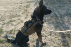Canine Tactical Ballistic Canine Vest