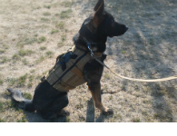 K9 Ballistic Harness